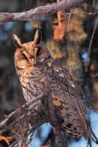 Bild: Naturfotograf Ralf Weise