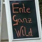 Wilde Ente