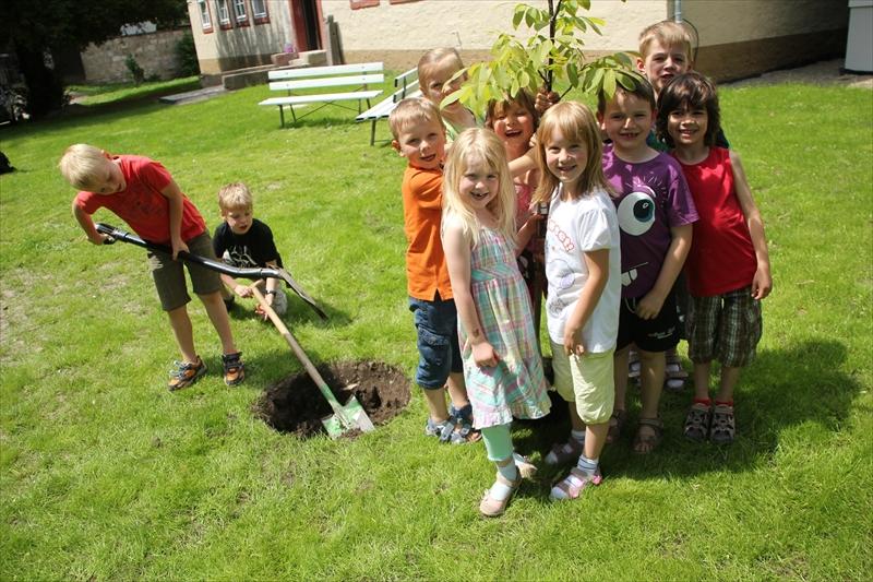 Baumpflanzung (1)
