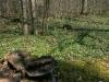 wandertour-durch-die-hollau-zu-den-alten-eichen-39.jpg