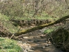 wandertour-durch-die-hollau-zu-den-alten-eichen-41.jpg