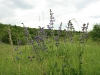 0906-wandertour-erdfall-dachrieden-10