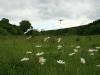 0906-wandertour-erdfall-dachrieden-16