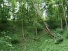 0906-wandertour-erdfall-dachrieden-25