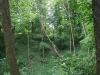 0906-wandertour-erdfall-dachrieden-26
