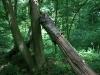 0906-wandertour-erdfall-dachrieden-40