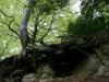 entlang-des-naturlehpfades-faulungen-46.jpg