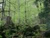 entlang-des-naturlehpfades-faulungen-51.jpg