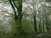 entlang-des-naturlehpfades-faulungen-90.jpg