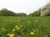 090502-naturschutzgebiet-golke-ufhoven-19.jpg