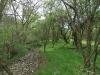 090502-naturschutzgebiet-golke-ufhoven-34.jpg