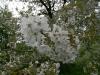 090502-naturschutzgebiet-golke-ufhoven-56.jpg