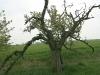 090502-naturschutzgebiet-golke-ufhoven-60.jpg