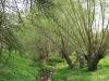 090502-naturschutzgebiet-golke-ufhoven-70.jpg