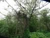 090502-naturschutzgebiet-golke-ufhoven-74.jpg