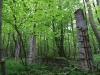 impressionen-wanderweg-stadtwald-zur-korpusbuche-32.jpg