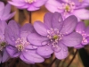 leberbluemchen.jpg