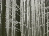 winterwald-13.jpg