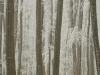 winterwald-46.jpg
