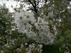 090502-naturschutzgebiet-golke-ufhoven-56