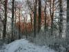 winter-im-hainich-3.jpg