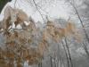 winter-im-hainich-5.jpg