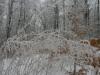 winter-im-hainich-6.jpg