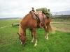 mit-pferden-unterwegs-3