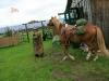 mit-pferden-unterwegs-9