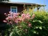 kleingarten-von-frau-ute-auener-34
