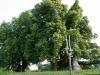 mallinden-31.jpg