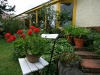 gartenpracht-bei-dieter-und-adelheid-stauch-in-muhlhausen-95