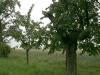 impressionen-schlotheim-issersheilingen-neunheilingen-3