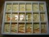 minze-melisse-zitrus-in-dividor-klein