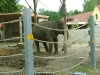 elefanten-zoo-augsburg