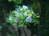 090711-impressionen-thomasquelle-thomaswiese-popperoeder-quelle-6